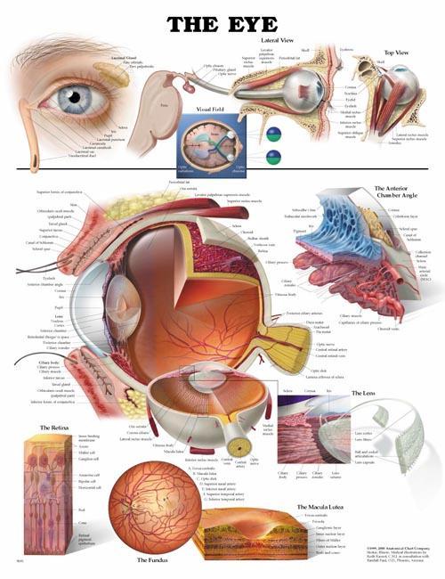 Время проведения биопсии предстательной железы